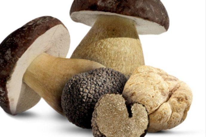 Raccolta funghi, tartufi e altri prodotti spontanei della terra: le novità