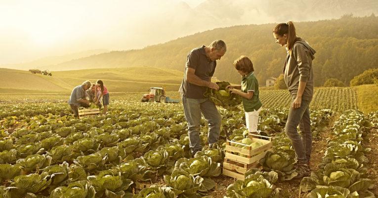 Bando regionale – Investimenti nelle aziende agricole finalizzati al miglioramento delle prestazioni