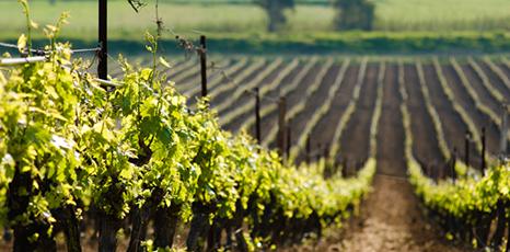 """Buschini: """"Al via programma di contributi per settore vitivinicolo"""""""